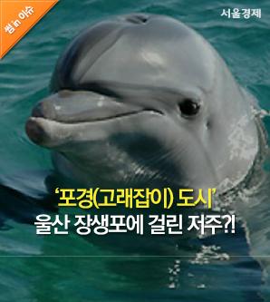 [썸in이슈] '포경(고래잡이) 도시' 울산 장생포에 걸린 저주?!