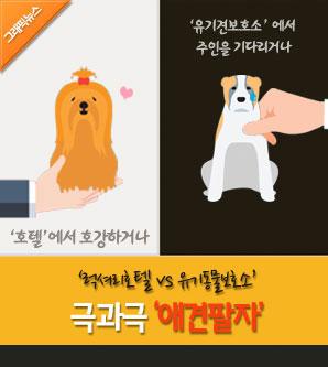 [그래픽뉴스] 럭셔리호텔 vs 유기동물보호소…극과극 애견팔자