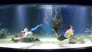 [쉼] 춤추는 인어...뛰노는 니모·도리...수중 세계에 펼쳐진 '환상의 행성'