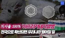 [영상]'열흘만에 9건' 중국보다 빠른 돼지열병 확산 … 이대로는 한국이 위험하다?