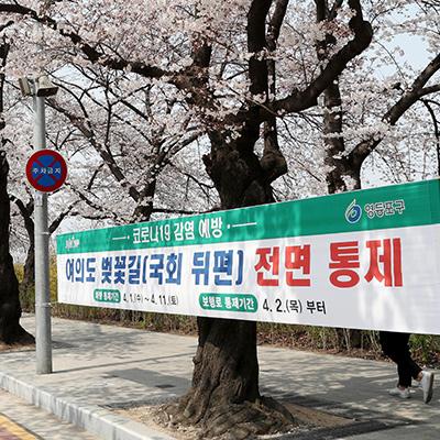 벚꽃 만발한 윤중로 통제