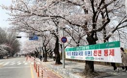 """벚꽃놀이 내년에 즐기세요""""… 서울시, 이번 주말 여의도한강공원 주차장 폐쇄"""
