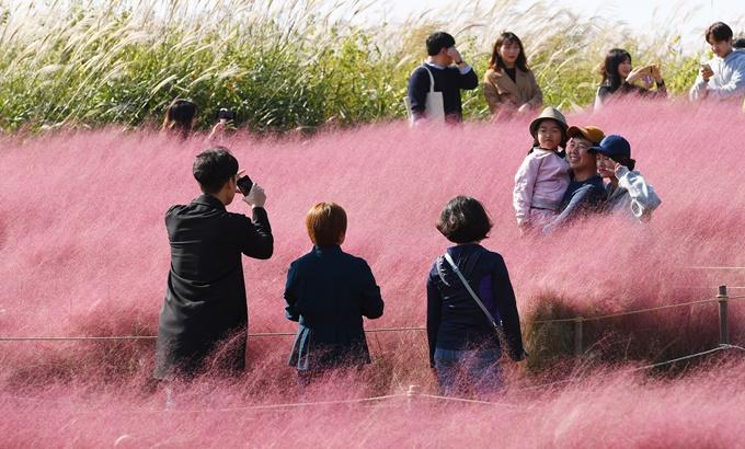 '가을이 좋다'...하늘공원 핑크뮬리 억새