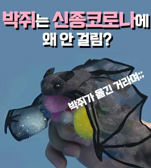 [영상]박쥐는 어쩌다 날아다니는 바이러스 저장소가 되었나