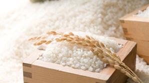 쌀값 미스터리...수요 감소에도 47% 급등 왜