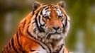 [토요워치] 철창 밖 자유, 죽어야 얻는다…동물원 논란