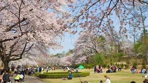 도시공원 땅 풀리자 소유주들에 대못 박는 서울시